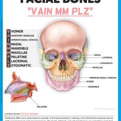 Facial Bones Diagram Not Labeled Visual Studio 2012 Database Cranial Clip Free Hot Sex Teen