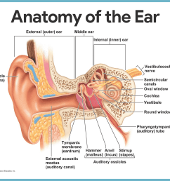 the ear hearing and balance [ 1798 x 1261 Pixel ]