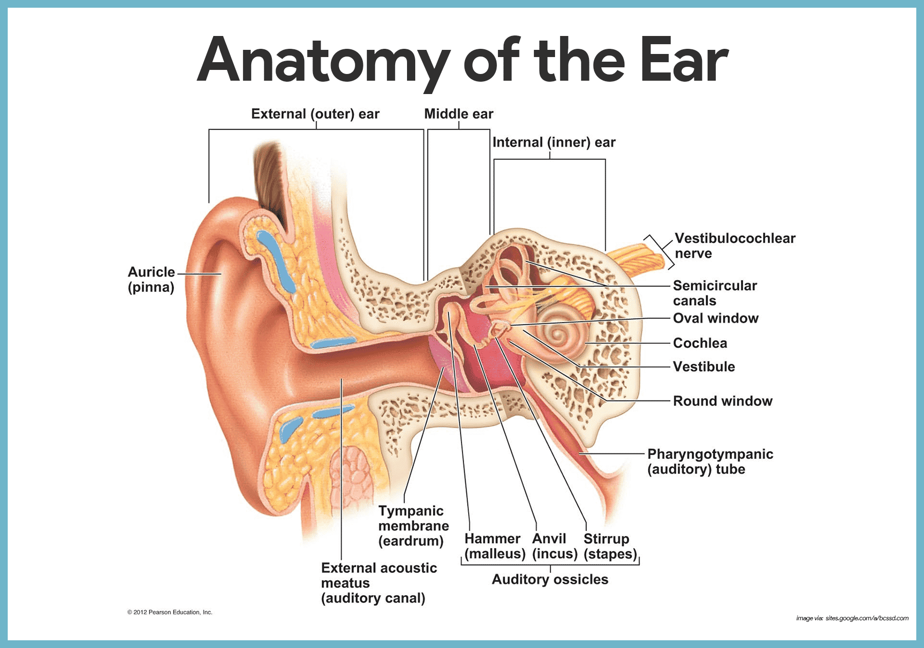hight resolution of the ear hearing and balance