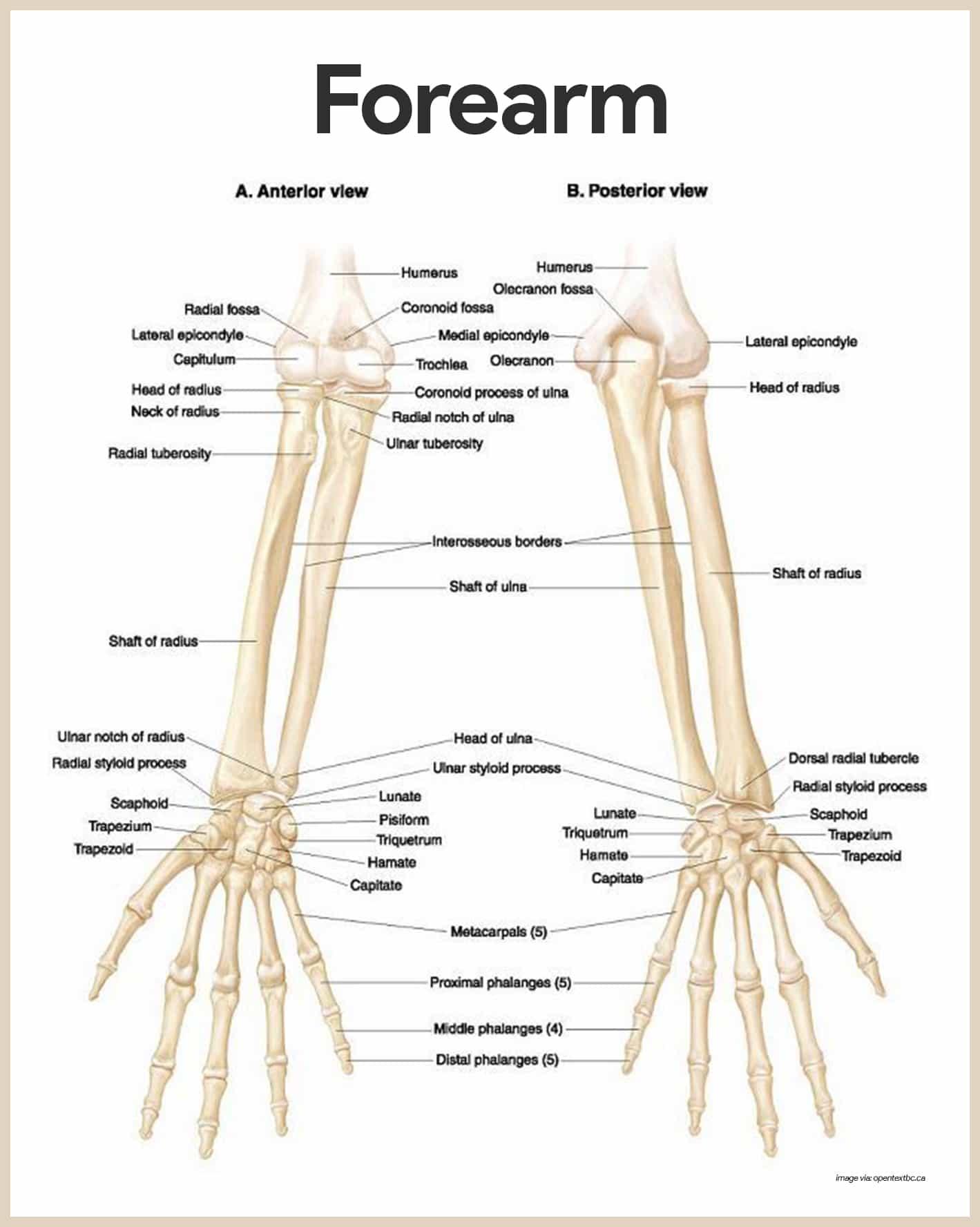 Parts Of The Skeleton Worksheet