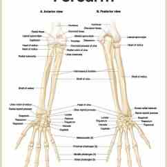 Head And Neck Muscles Diagram Blank 2002 Chevy Avalanche Stereo Wiring Skeletal System Anatomy Physiology - Nurseslabs