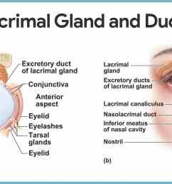 diagram of eye nose wiring diagram expert anatomy of eye and nose diagram of eye nose [ 2169 x 1164 Pixel ]