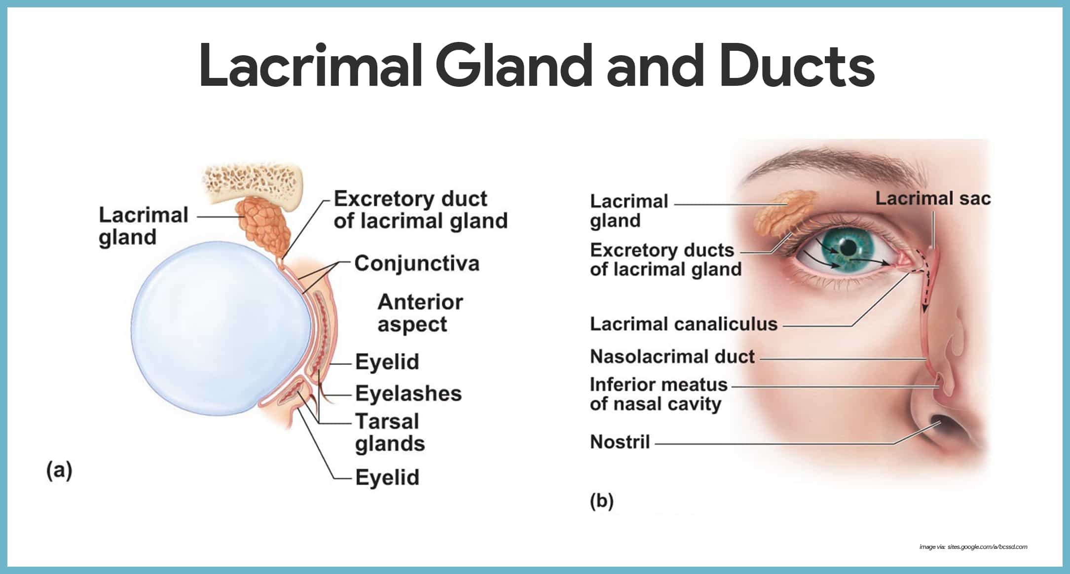 eye labeling diagram quiz pv for adiabatic process special senses anatomy and physiology - nurseslabs