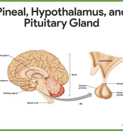 hormones of the anterior pituitary [ 1419 x 1164 Pixel ]