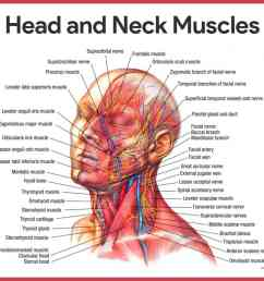 head and neck muscles muscular system [ 1419 x 1164 Pixel ]