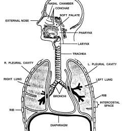 the respiratory system [ 2075 x 2442 Pixel ]