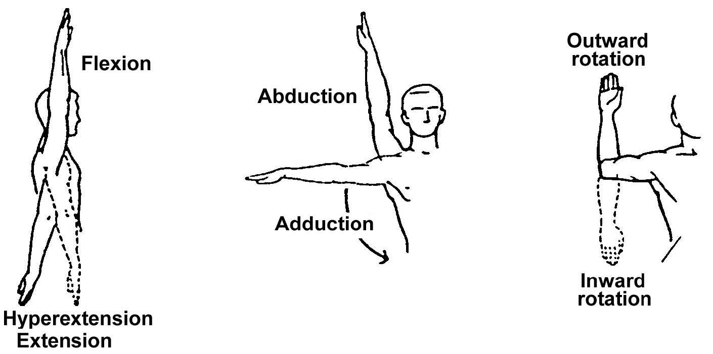 Exercises: Range Of Motion Exercises