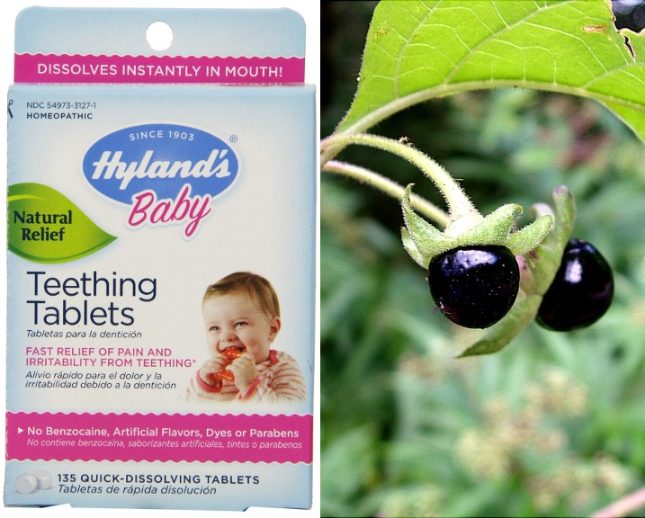 "The FDA issued a warning in 2010 that Hyland's Teething Tablets had inconsistent levels of belladonna (""Deadly Nightshade""), a plant used for centuries, and still today, for its potent medicinal properties. But a mere 600 milligrams delivers a lethal dose of atropine, and belladonna also contains scopolomine, which children are especially susceptible to. (LEFT Hyland's Teething Tablets box. RIGHT Belladonna berries. Jan Samanek/State Phytosanitary Administration, Bugwood.org 