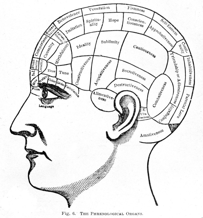 """The science of phrenology suggested different parts of the brain controlled specific traits and that analysis of the size of these different parts could reveal someone's character. This chart of """"The Phrenological Organs"""" comes from 1887. (Wellcome Library no. L0001965 