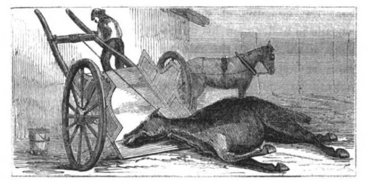 "Illustration from the chapter ""On Waste,"" in The Uses of Animals in Relation to the Industry of Man, by Edwin Lankester (1860). (Google Books 
