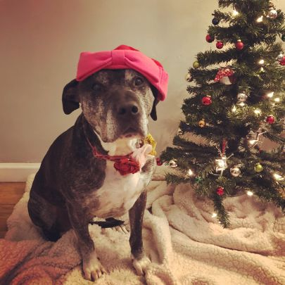 Photos with Santa Paws: Ruminations on Pets, Precarity, Consumption, and Family