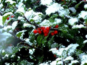 Snow 2013-2014 015