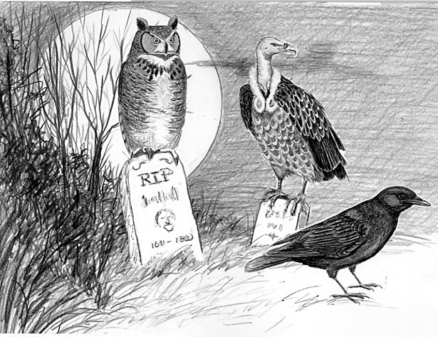 Credit to http://www.birdwatchersgeneralstore.com/TheBirds.htm