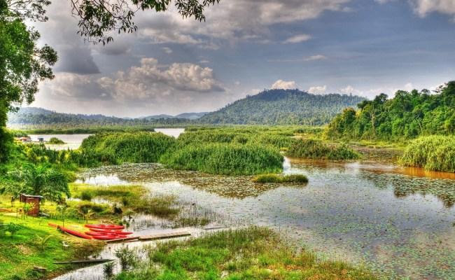 1 Jungles Near Tasik Chini Malaysia 15 Unique Places