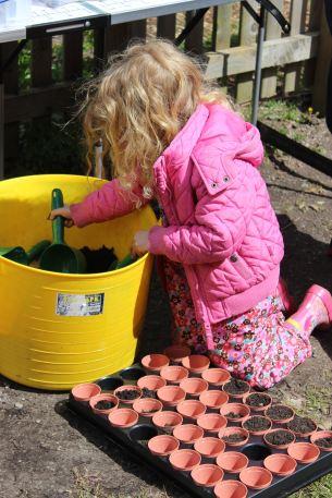 pea-planting