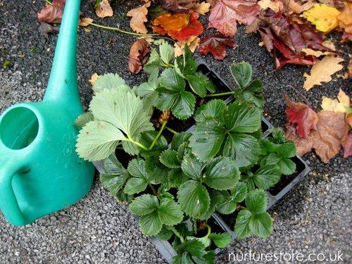 School Garden Ideas
