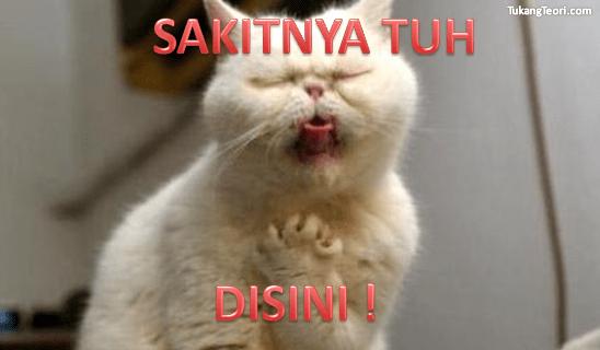 Lihat Kumpulan Meme Kucing Lucu Demikianlah Artikel Kata
