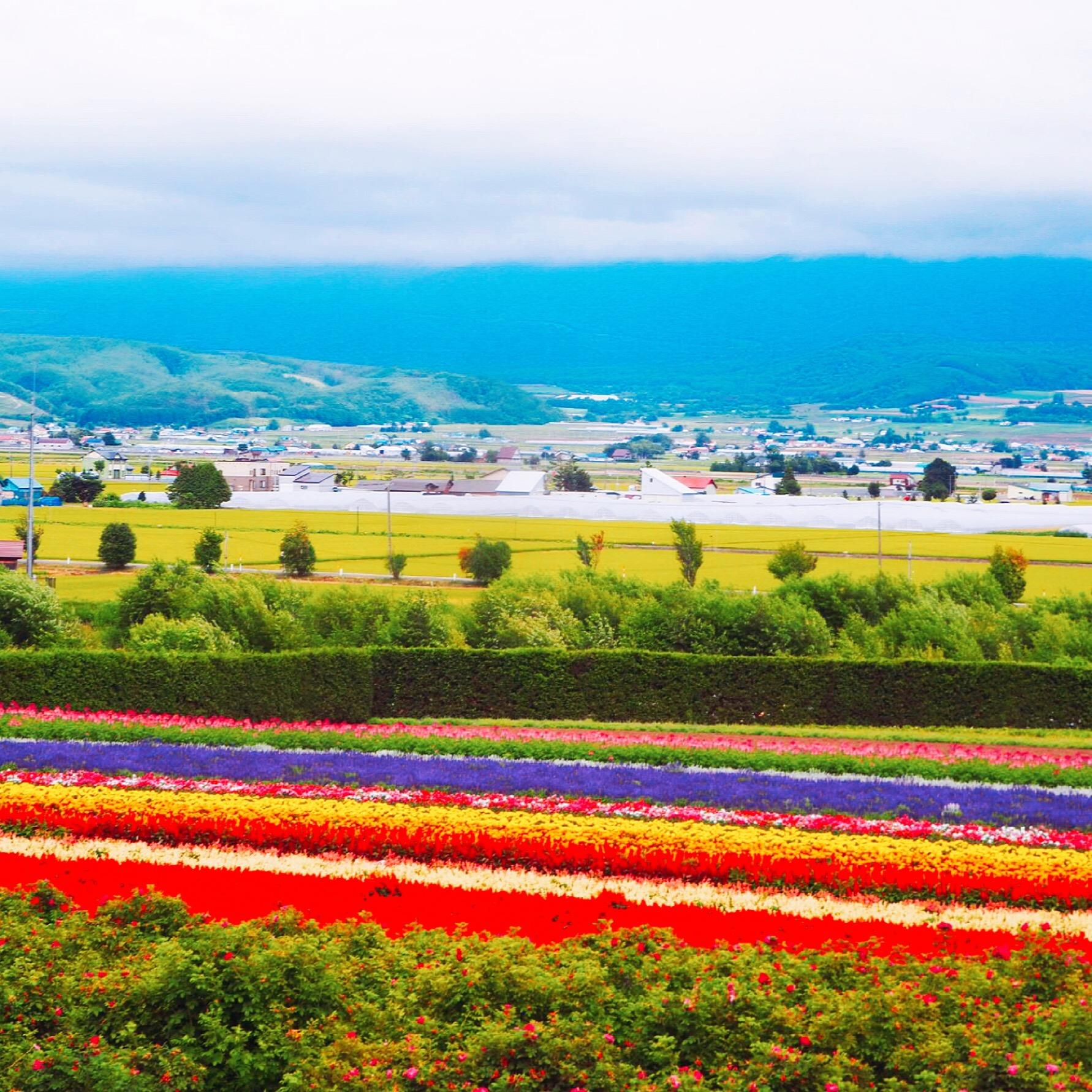 Hokkaido Summer Trip Flower Hunting Feat Delicious Food Soft Cream