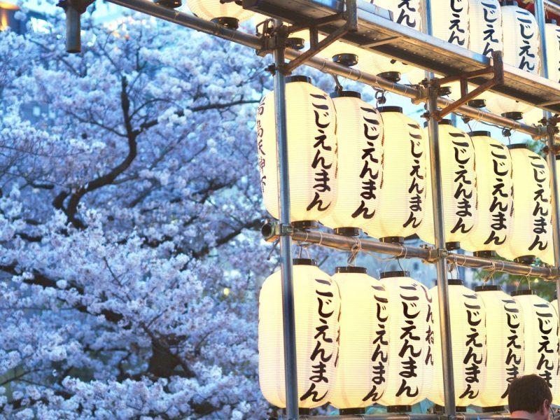 sakura ueno park
