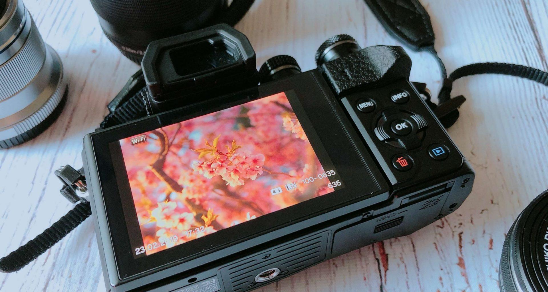 Sakura photo in camera