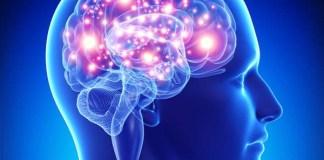 Sistem saraf otak manusia/Ilustrasi emer