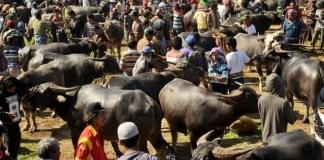 Suasana Pasar Kerbau di Toraja/Foto nusantantaranews via harnas