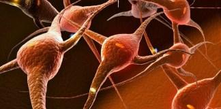 Ilustrasi Jaringa Sel otak bayi/Foto: Istiemwa