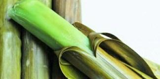 Pupudak Kuliner Khas Banjarmasin/Foto: Dok. @hrudyariffin