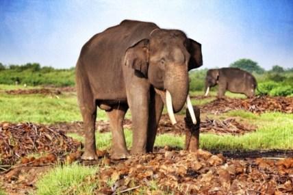 Salah Satu Gajah Penghuni Taman Nasional Way Kambas. Foto via 7asia