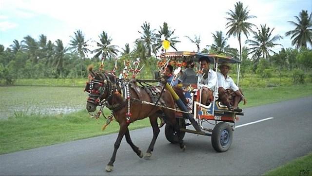 Cidomo | excursion.govacation-indonesia.com