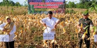 Gerakan Tanam dan Panen Jagung/Foto Dok. Humas Kementan/Nusantaranews