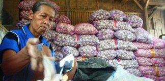 Penjual Bawang/Foto via jambi/Nusantaranews