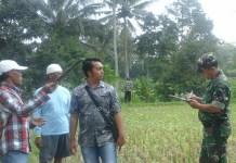 Penelitian konstur tanah oleh kelompok tani di Jember/Foto Dok. Pribadi/Nusantaranews