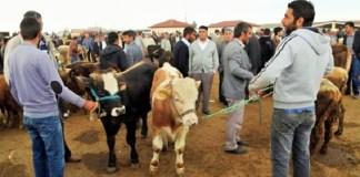 Tradisi Kurban di kalangan Masyarakat Turki. Foto: Dok. Middle East Eye