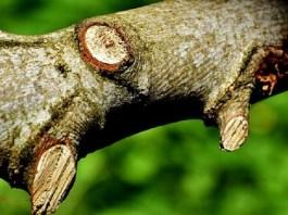 Bekas Gergaji di Dahan Pohon (Ilustrasi). Foto: Dok. Pixabay