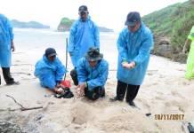 Pengembalian telur penyu ke kawasan cagar alam Jember, Pulau Nusa Barong. Foto: Dok. Kodim Jember