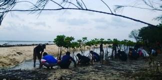 Penanaman mangrove di Pantai Pulau Panjang, Jepara (Foto Istimewa/Nusantaranews)