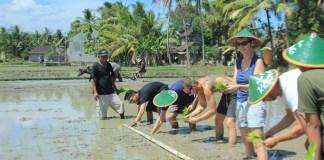 Desa Wisata Candran Kebunagung Imogiri Bantul. Foto: Tour Wisata Jogja