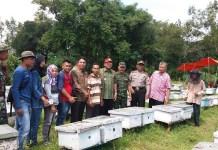 Forpimcam Rubaru ikut melakukan panen madu di Desa Banasareh Kecamatan Rubaru Sumenep. (Foto: Mahdi Alhabib/NusantaraNews)