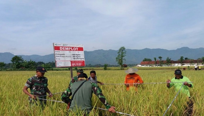 Pengukuran perkiraan produksi padi milik anggota kelompok tani di Ponrogo, Rabu (7/3/2018). (Foto: Muh Nurcholis/NusantaraNews)
