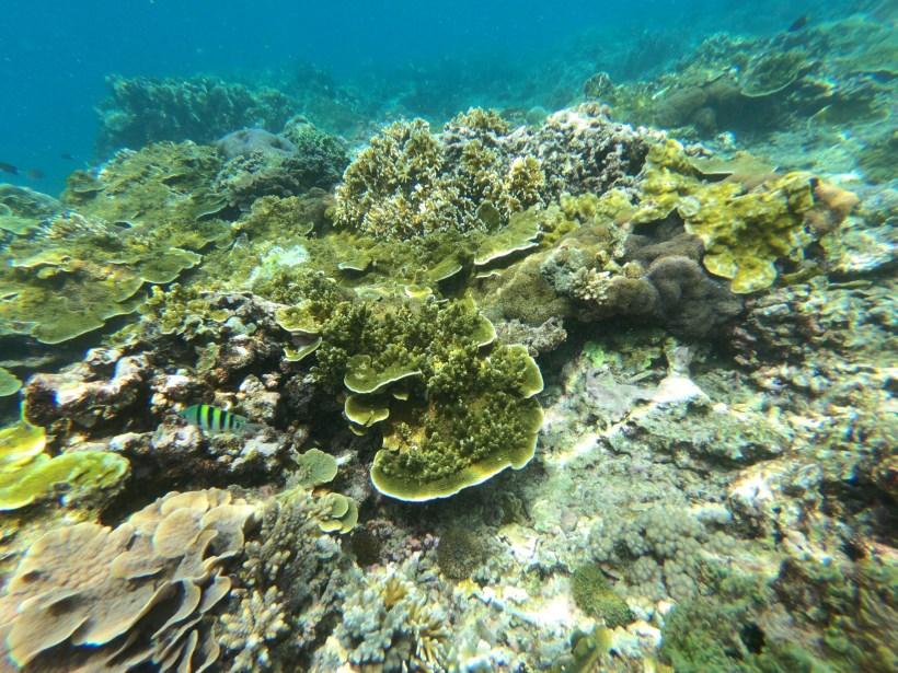 coral reef nusa penida snorkeling