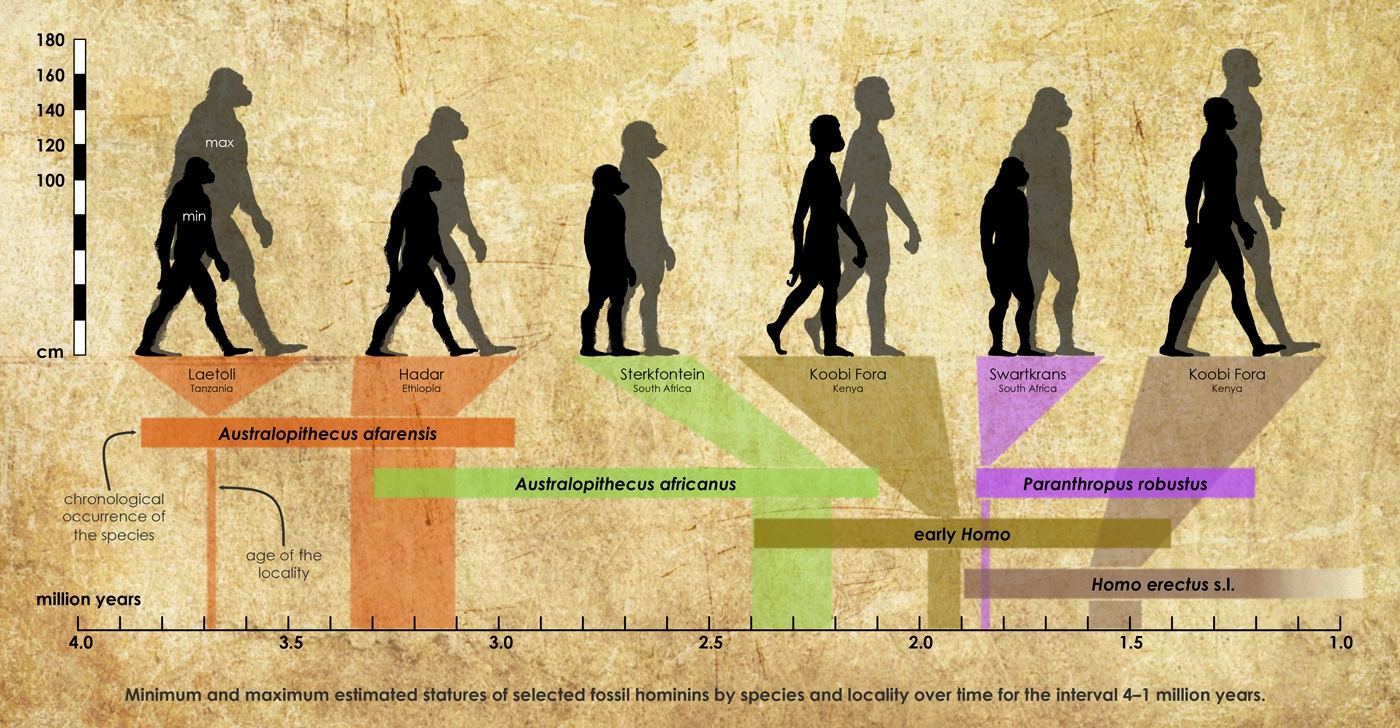 Quick Summary Of The New Hominin Footprints At Laetoli
