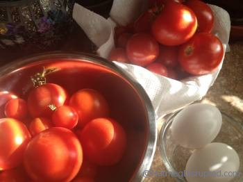 fresh tomatos for salsa