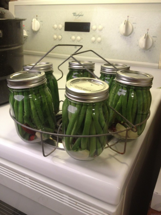 Jars of pickled beans going into the canner in the Nutmeg Disrupted kitchen