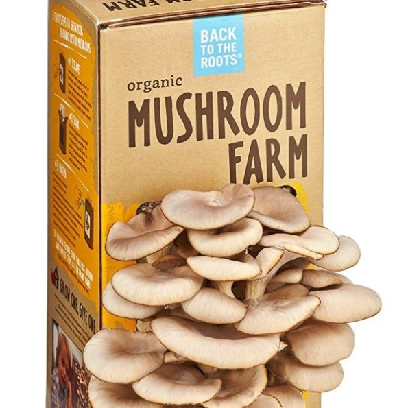 Mushroom kits are in the top 10 list of Christmas gifts for gardeners on Nutmeg Disrupted