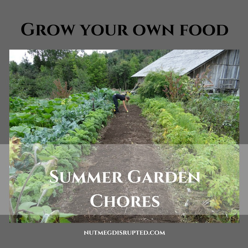 Grow YOur Own Food Summer Garden Chores