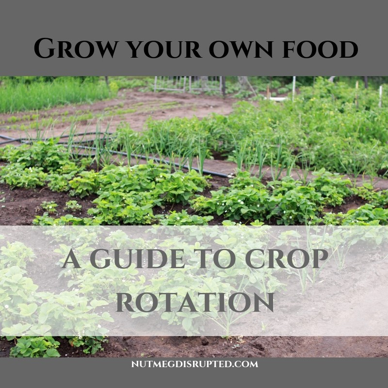Grow Your Own Food A Guide To Crop Rotation in the Garden from Nutmeg Disrupted