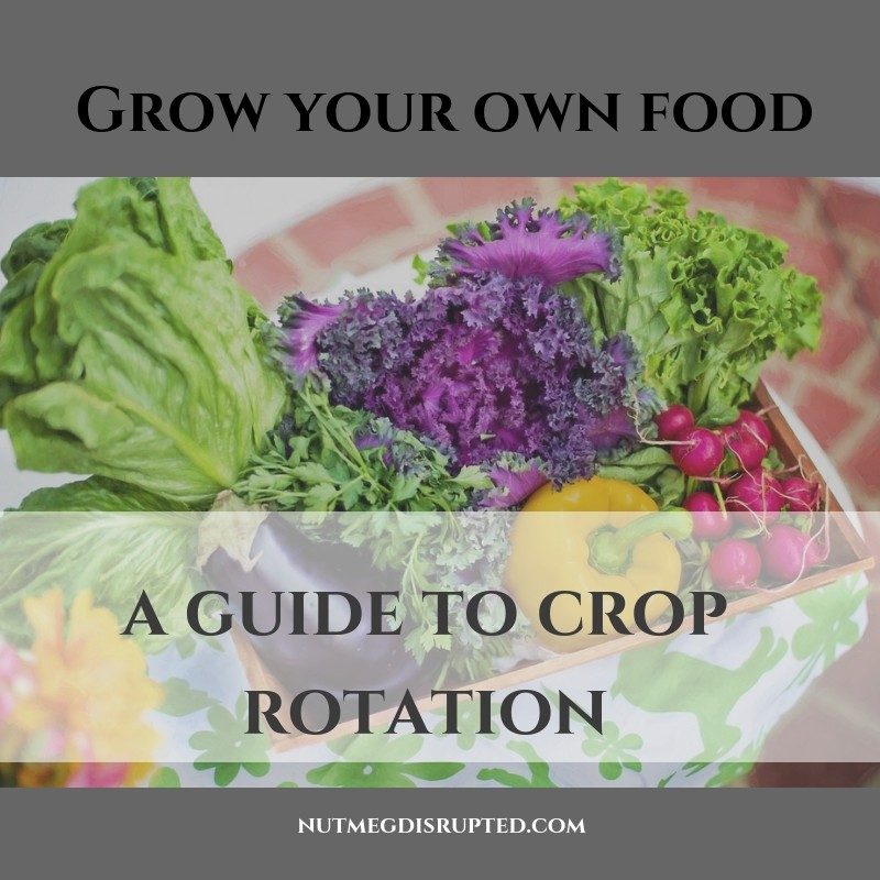 Grow Your Own Food A Guide To Crop Rotation for the Garden from Nutmeg DIsrupted