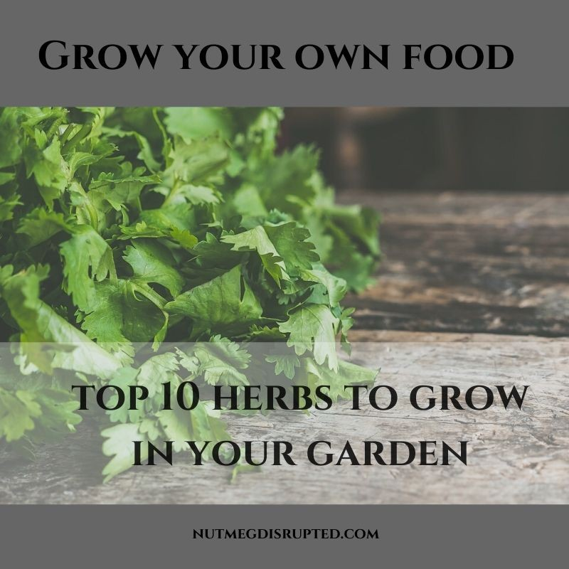 Grow Your Own Food Top 10 herbs to Grow In Your Garnde on Nutmeg Disrupted