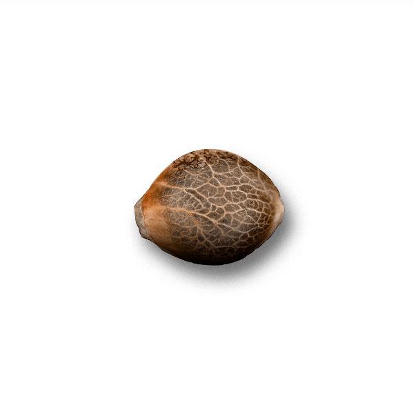 Купить Семена White Widow Nutra-Seed Bank